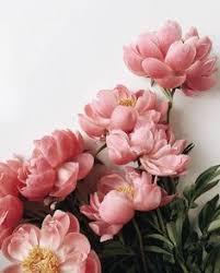Flowers: лучшие изображения (456) в 2019 г. | Beautiful flowers ...