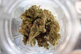 is marijuana harmful at the edge us news