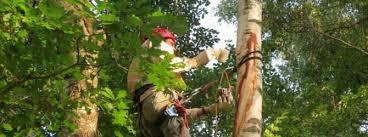 <b>Садовый вар</b> или как лечить раны деревьев