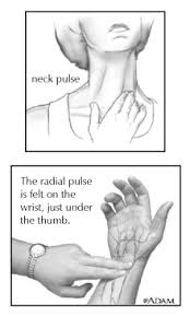finding your pulse