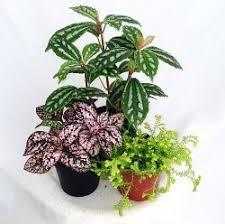 terrarium plants best low light office plants