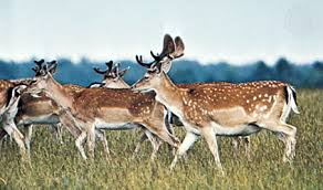 <b>animal</b> | Definition, Types, & Facts | Britannica