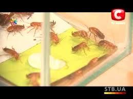 Домашние средства от тараканов и муравьев – Все буде добре ...
