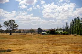 an essay on drought list the impacts of drought also list the english drought affected paddock in north wagga