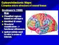 Images & Illustrations of cytoarchitectonic