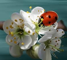 """Résultat de recherche d'images pour """"images de fleurs très belles"""""""