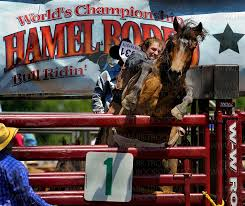 Image result for hamel rodeo