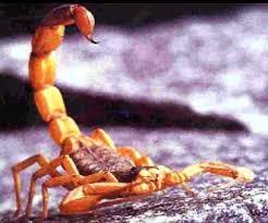 Resultado de imagem para escorpiões e mosquitos da dengue