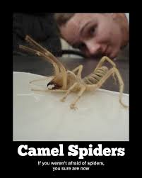 Funny Scary Spider Memes | afraid of camels and spiders, and now ... via Relatably.com