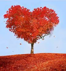 Risultati immagini per from my heart to yours autumn