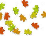 Resultado de imagen para hojas de otoño cayendo del arbol