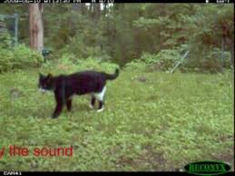 Test of ultrasonic cat <b>repellent</b> - YouTube