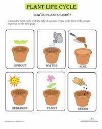 Kindergarten Science Worksheets & Free Printables | Education.comScience. Worksheet. Plant Life Cycle Flash Cards