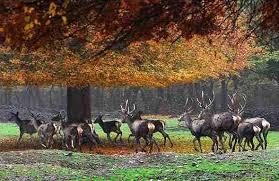 نتیجه تصویری برای پارک ملی گلستان و قرخود