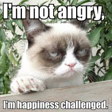 26 Funny Angry Cat Memes for Any Occasion - Freemake via Relatably.com