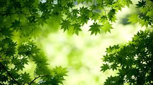 Image result for beautiful leaf