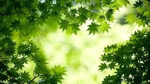 Image result for beautiful leaf