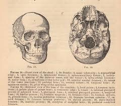 best images of vintage anatomy diagrams   vintage medical heart    vintage skull diagrams anatomy