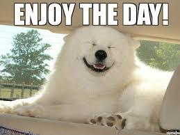 Memes Vault Happy Dog Friday Memes via Relatably.com
