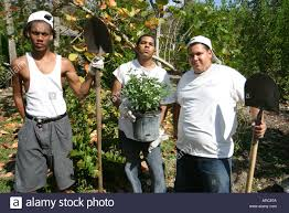 miami beach florida teen job corp earth day butterfly garden stock miami beach florida teen job corp earth day butterfly garden installation digging planting working work