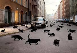 Приметы кошки, черная кошка <b>кот приносит</b> удачу, суеверия ...