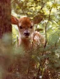 165 Best kerti images | Animals beautiful, Beautiful creatures ...