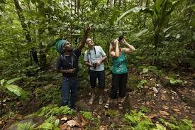 <b>Rainforest</b> Adventures: Excursions and tours in the Caribbean