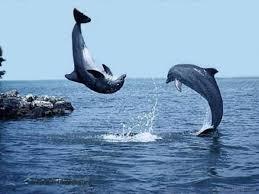 أكبر تجميع لأجمل صور من اعماق البحار (سبحان الله الخالق العظيم) Images?q=tbn:ANd9GcRbku15q0M3SOBAWubOnlGb4sQlbzKV2f4RwPdTnMHFFaKacsbV