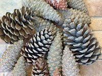 Природные материалы для творчества, рукоделия и декора ...