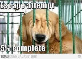 Memes to cheer me up? - Weddingbee via Relatably.com