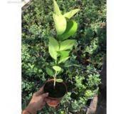 Цветы и растения: Купить в Люберцах - цены в магазинах на ...