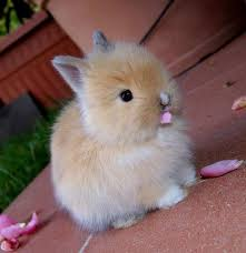 Image result for cute pictures