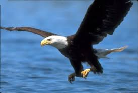 Image result for THE EAGLES AND THE VINE IN THE BIBLE