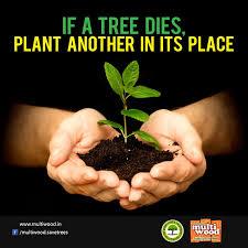 Image result for Tree plantation