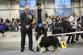 collie roughs international dogshow lublin pl amnis rhei collie rough damien black amnis rhei judge richard kinsey from great britain