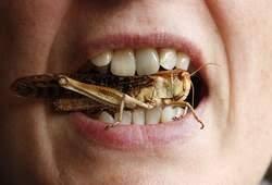 Afbeeldingsresultaat voor insecten eten