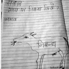 funny indian cow essay   indian cow essay   indianfunnypiccom funny indian cow essay  indian cow essay