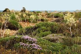 Flora of Vendicari