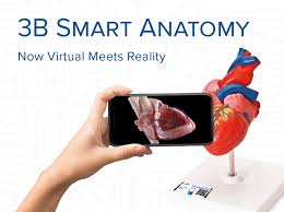 <b>Anatomical Models</b> | 3B Smart Anatomy with Free Anatomy App & 5 ...