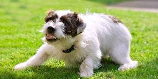 Understanding Your Dog's Body Language and <b>Sounds</b> | Hill's Pet