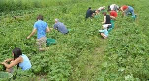 Image result for picking crops