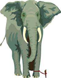Image result for the elephant rope short story