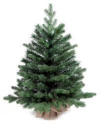 Искусственные <b>елки Royal</b> Christmas купить от голландского ...