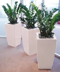 Комнатные Растения <b>Декор</b>