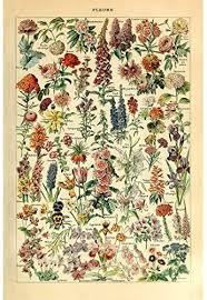 Meishe Art Vintage Poster Print Flower Floral ... - Amazon.com