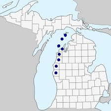 Orobanche fasciculata - Michigan Flora