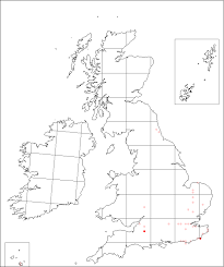 Crepis foetida | Online Atlas of the British and Irish Flora