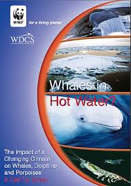 <b>Disturbed</b>, hungry and <b>lost</b> – climate change impacts on whales | WWF