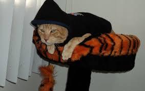 Resultado de imagem para Gato com frio? Não nesse inverno