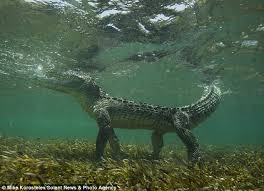 Image result for Crocodiles are blind in the water
